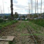 El Agroocio, una alternativa para la Huerta