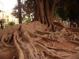 arboles Jardin Floridablanca Murcia 300x225 Los monumentos naturales de la ciudad de Murcia