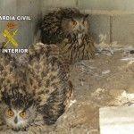 Rescatan varias aves rapaces en Archena