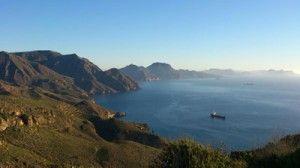 Cabo Tinoso Cartagena 300x168 Descubierta una especie de gorgonia americana en Cabo Tiñoso