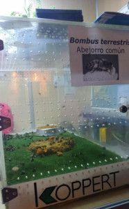 Abejas Murcia Region 186x300 En peligro las colmenas y las abejas de la Región de Murcia