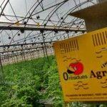En peligro las colmenas y las abejas de la Región de Murcia