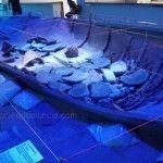 Uno de los barcos más antiguos del mundo descansa en Mazarrón