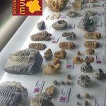 Museo-Arqueologico-Cehegin