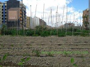 AgroOcio Murcia Cultivar tu propio huerto en tu tiempo libre