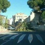 Fuertes vientos Murcia palmera Rambla Churra