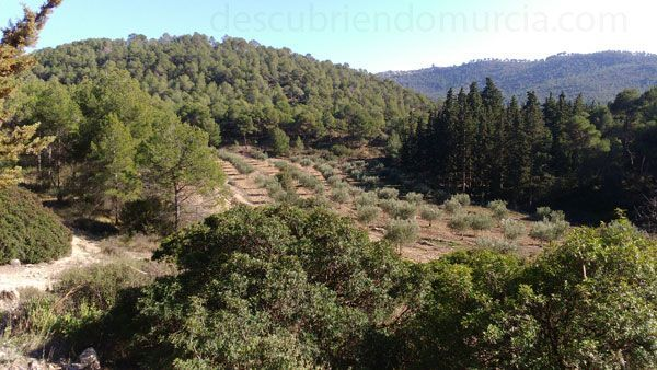 Sierra Espuna Ricardo Codorniú y una de las primeras reforestaciones en España