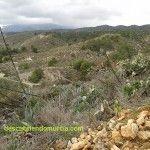 Sierra de Carrascoy Murcia
