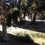 Fuertes vientos arrancan ramas en el Cuartel de Artillería y tumban palmeras en Churra