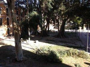fuerte viento Murcia Cuartel Artilleria 300x225 Fuertes vientos arrancan ramas en el Cuartel de Artillería y tumban palmeras en Churra
