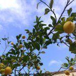 Los limones de Santomera y el asedio al Peñón de Gibraltar