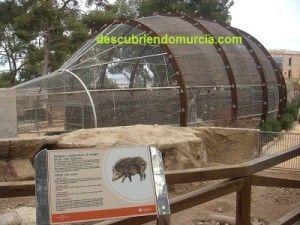Aviario Rapaces Murcia 300x225 Visitamos el Centro de Recuperación de Fauna Silvestre El Valle