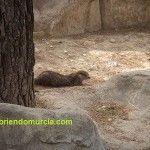 Cuando había nutrias en el río Luchena