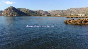 portman 1 300x169 Reforestar los montes de Cartagena con miles de especies