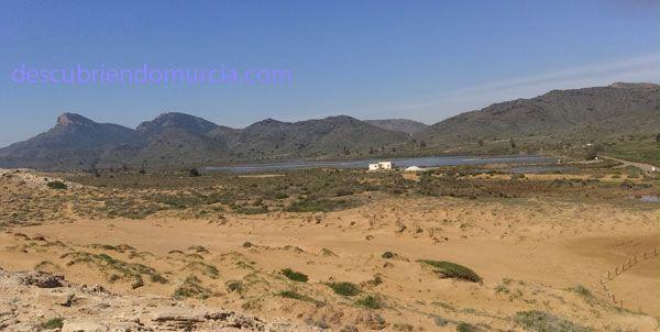 Salinas Rasall Calblanque Salinas del Rasall y Marchamalo, refugio para la fauna del Mar Menor