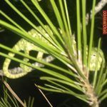 camaleon-el-valle-murcia
