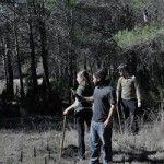 Plantación de Quejigos, el único roble de la Región de Murcia
