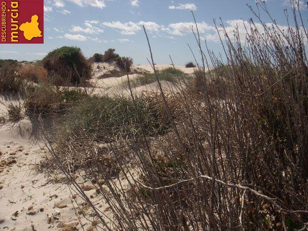 dunas salinas pinatar Preparando las dunas del Mar Menor para el otoño
