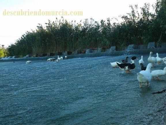 Contraparada Murcia El río Segura. A veces manso, otras hijoputa
