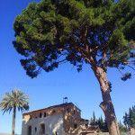 La casa torre Falcón de Espinardo y su pino centenario