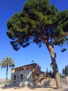 Casa Falcon Murcia Espinardo Joven Futura 225x300 La casa torre Falcón de Espinardo y su pino centenario