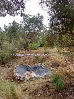 El Valle Murcia charca anfibios Charcas para anfibios en El Valle y el mosquito tigre