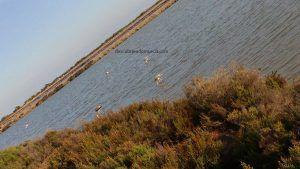 Salinas San Pedro Pinatar 300x169 Las Salinas de San Pedro en la Migratory Birds for People