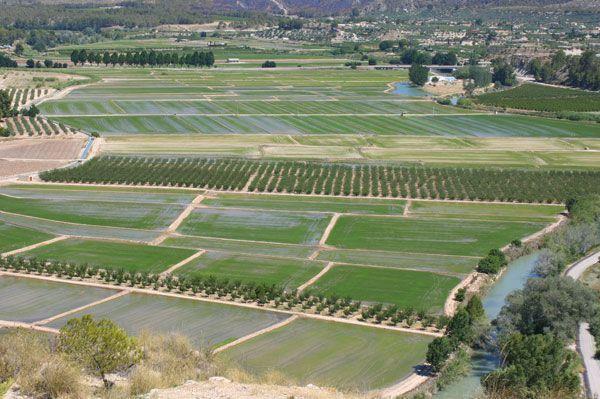 arroz Arroz de Calasparra, valores naturales y la etnia buyi de China