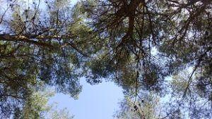 El Valle Murcia 300x169 Conciertos Música y Naturaleza en Cehegín, Mazarrón y Murcia